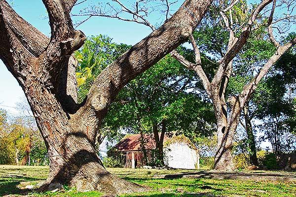 Habitacion Néron Guadalupa